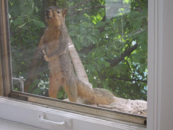 Squirrel Hijinks: IMG_0086