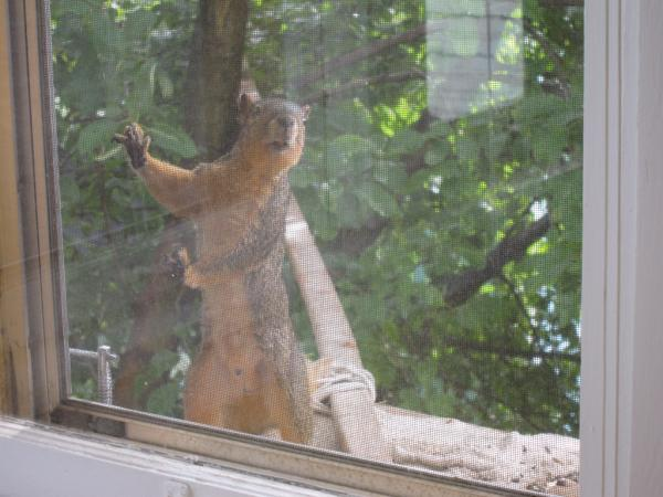 Squirrel Hijinks: IMG_0087
