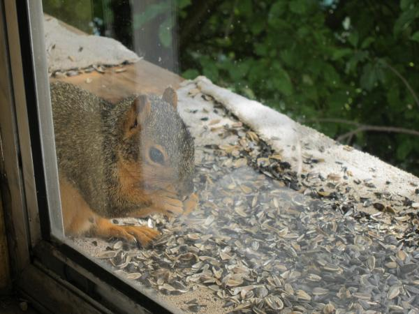 Squirrel Hijinks: IMG_0091