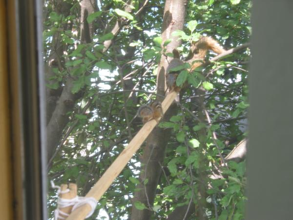 This is the showdown between the chipmunk and the squirrel. The chipmunk was already on the platform when the squirrel decided he was hungry too