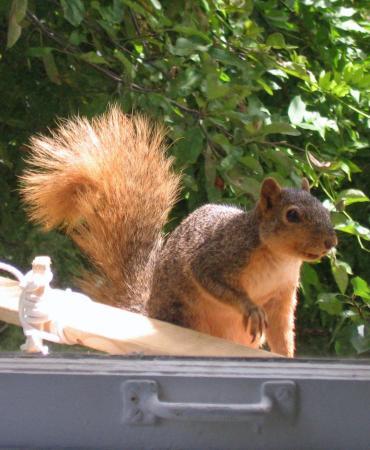Casper the Squirrel