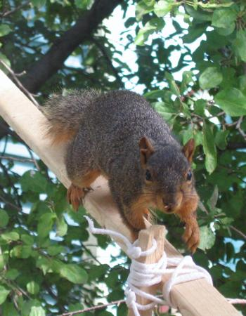 Rocky the Squirrel