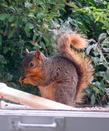 Adam the Squirrel